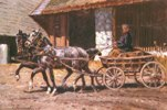 Horse-Drawn Cart